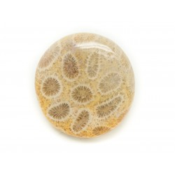 N10 - Cabochon de Pierre - Corail Fossile Rond 30mm - 8741140006485