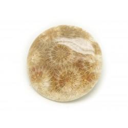 N13 - Cabochon de Pierre - Corail Fossile Rond 37mm - 8741140006515