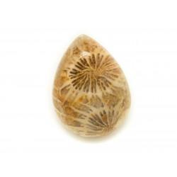 N27 - Cabochon de Pierre - Corail Fossile Goutte 20x15mm - 8741140006652