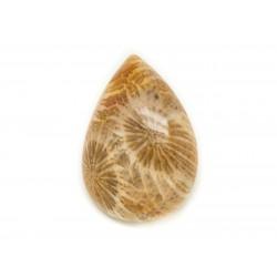 N31 - Cabochon de Pierre - Corail Fossile Goutte 24x18mm - 8741140006690